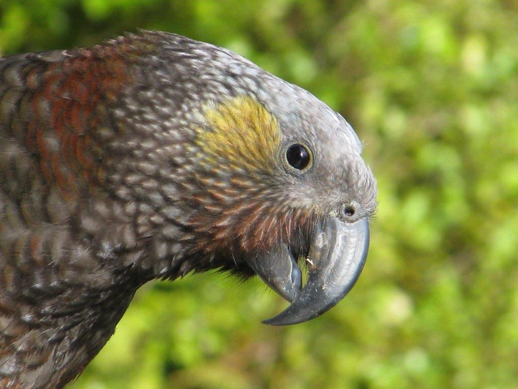 world of birds elphick pdf
